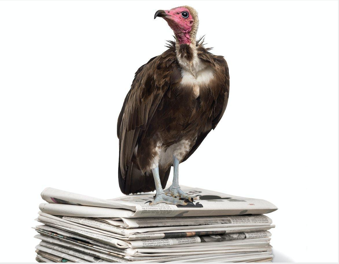 Vulture standing on a stack of newspapers.